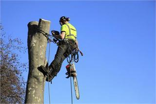 Arboricultural Services - tree pollarding and removal